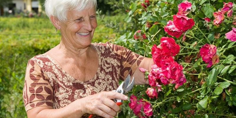 Frau schneidet eine Rosenhecke